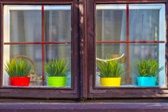 Four colored pots with plants behind the window royalty free stock photos