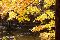 Sunlit orange trees in the fall frame a small creek. Stock Images