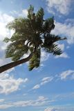 Sunlit palm tree with clouds in the sky Royalty Free Stock Image