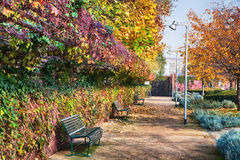 Sunlit park in autumn Royalty Free Stock Photography