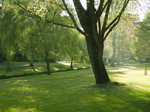 Sunlit park in Springtime. Beautiful trees coming into leaf in Spring Royalty Free Stock Photo