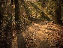 Sunlit Path. Path in forest lit by beams of light Royalty Free Stock Images