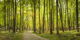 Sunlit Path. An early autumn panoramic view of a sunlit path Royalty Free Stock Images