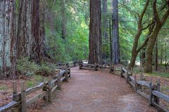 Path through giant redwood forest at Big Basin State Park, California, USA. Sunlit path through giant redwood forest at Big Basin State Park, California, USA royalty free stock photo