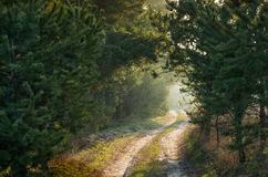 Sunlit path through the pine forest. Sunlit path through the spring pine forest Stock Photo