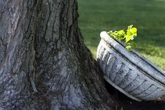 Sunlit Planter By Tree Royalty Free Stock Photography