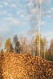 Sunlit pulpwoodpile в лесе Стоковое Фото