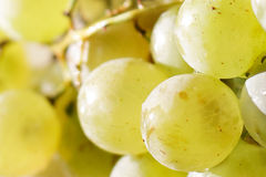 Sunlit ripe grape closeup Stock Image