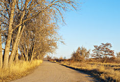 Sunlit Rural Road with Tall Bare Trees Stock Photo