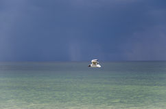 Sunlit seagull flying over ocean with dark clouds in the horizon Stock Photography