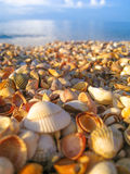 Sunlit shore. With a lots of seashells. Blue sky and light waves Royalty Free Stock Image