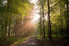 sunlit skog Arkivbild
