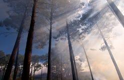 sunlit skog Royaltyfri Fotografi