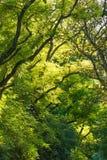 sunlit skog Royaltyfri Foto