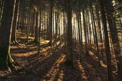 sunlit skog Arkivfoto