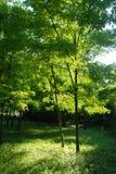 sunlit skog Arkivfoton