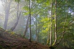 sunlit skog Royaltyfria Bilder