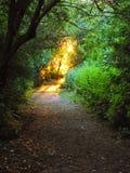 sunlit skogbana Royaltyfria Bilder