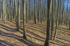 Sunlit slope in the autumn forest Royalty Free Stock Images