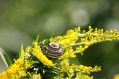 Sunlit Snail Royalty Free Stock Images