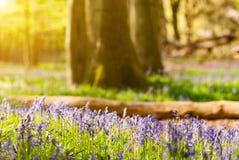 Sunlit spring forest Stock Image