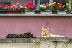 Sunlit stray kittens sleeping on a concrete fence royalty free stock photos