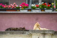 Sunlit stray kittens sleeping on a concrete fence royalty free stock image