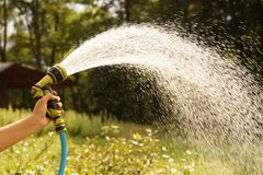 A sunlit stream of water. Watering garden crops with a watering gun royalty free stock photography