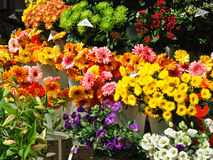 Sunlit street flowers for sale. In Prague Stock Photos