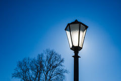 Sunlit street lamp and a tree Royalty Free Stock Images