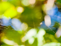 Sunlit thin gossamer Stock Photos
