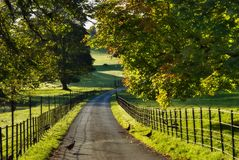 Sunlit Track Through Dallam Park Stock Image