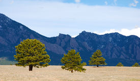 Sunlit trees against a shadowed mountain range Stock Image