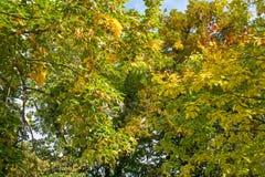 Sunlit trees in autumn. Sunlit colorful trees in autumn Stock Image