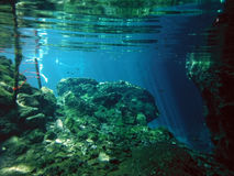 Sunlit Underwater Scenery of Yucatán Gran Cenote Stock Photography