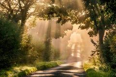 sunlit väg Fotografering för Bildbyråer