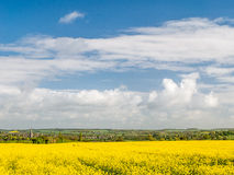 Sunlit View to Church - Field of Rapeseed Royalty Free Stock Photography