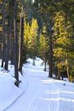 sunlit vinter för skogväg Royaltyfria Bilder