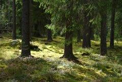 Sunlit Wald Stockfotografie