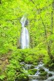 sunlit waterfall Стоковые Изображения
