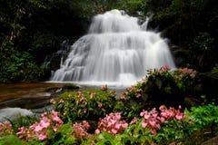sunlit waterfall Arkivfoton
