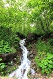 sunlit waterfall Стоковые Фотографии RF