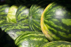Sunlit watermelons Royalty Free Stock Photography