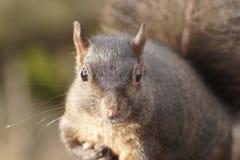 Sunlit whiskers Lizenzfreie Stockbilder