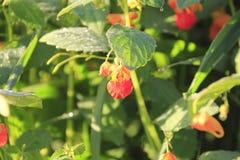 Sunlit Wild Flower Stock Photo