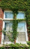 Sunlit window of old red brick building covered by green plant Royalty Free Stock Image
