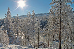 Sunlit Winter Forest in Covered in Snow Stock Image