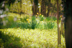 Sunlit Wood in Early Spring Royalty Free Stock Photos