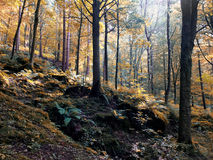 sunlit woodland in early autumn in Yorkshire stock images