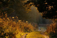 Sunlit woodland path Stock Photo